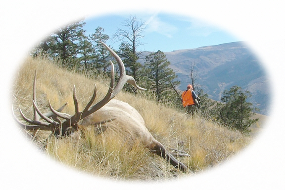 2004 elk drop camp hunt won a top trophy elk for Joe Heckle from Mn.-Timberline Outfitters & Guide Service, Inc.